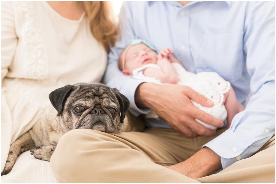 newborn-photo-session-with-pug